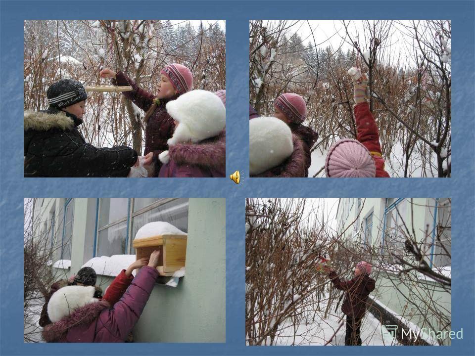 Помогаем птицам