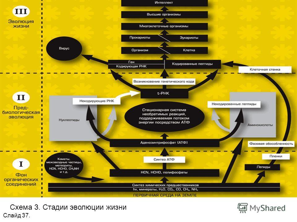 Слайд 37. Схема 3. Стадии эволюции жизни