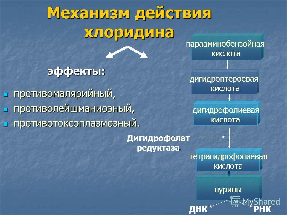 Механизм действия хлоридина эффекты: противомалярийный, противомалярийный, противолейшманиозный, противолейшманиозный, противотоксоплазмозный. противотоксоплазмозный. парааминобензойная кислота дигидроптероевая кислота дигидрофолиевая кислота тетраги