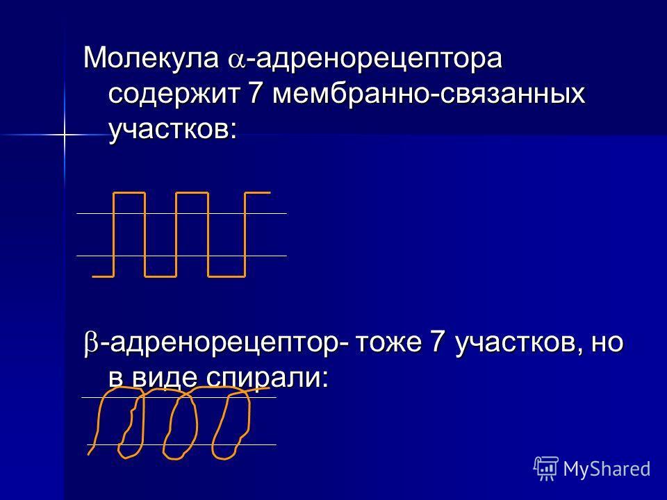Молекула -адренорецептора содержит 7 мембранно-связанных участков: -адренорецептор- тоже 7 участков, но в виде спирали: -адренорецептор- тоже 7 участков, но в виде спирали: