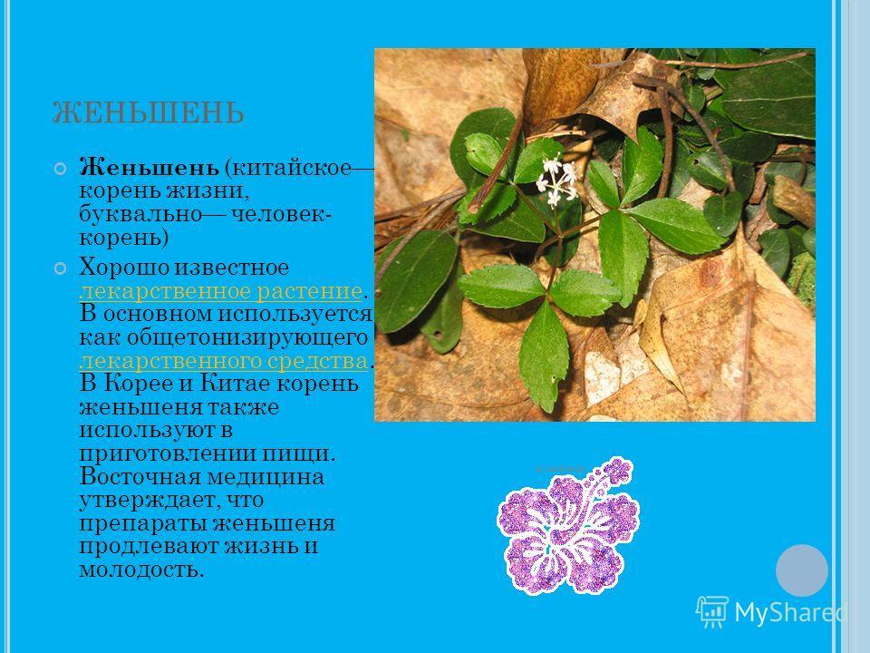 ЖЕНЬШЕНЬ Женьшень (китайское корень жизни, буквально человек- корень) Хорошо известное лекарственное растение. В основном используется как общетонизирующего лекарственного средства. В Корее и Китае корень женьшеня также используют в приготовлении пищ