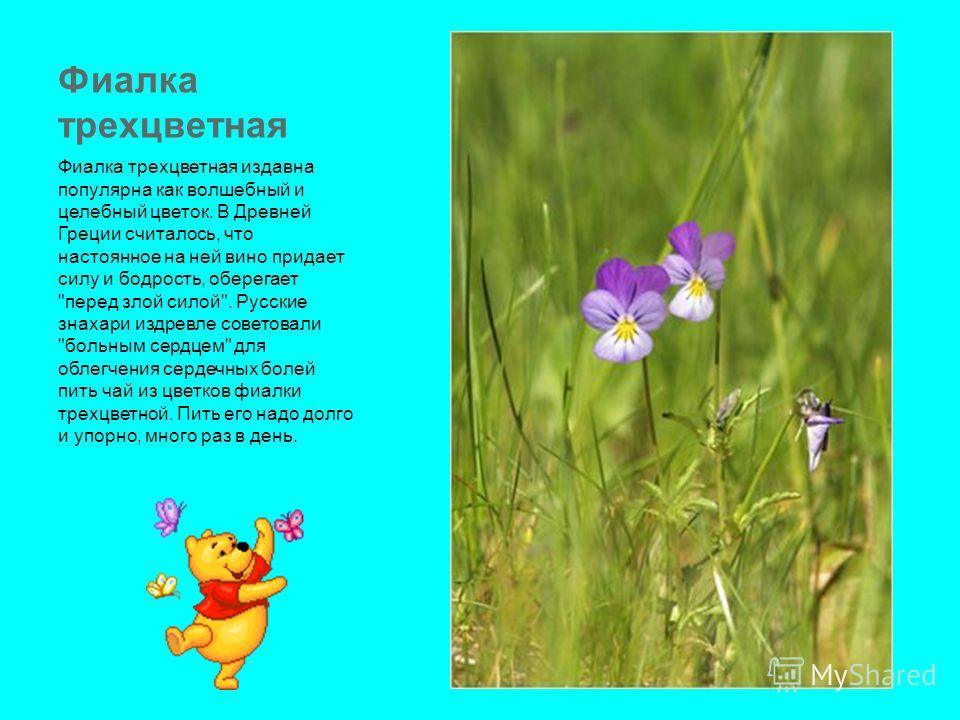 Фиалка трехцветная Фиалка трехцветная издавна популярна как волшебный и целебный цветок. В Древней Греции считалось, что настоянное на ней вино придает силу и бодрость, оберегает