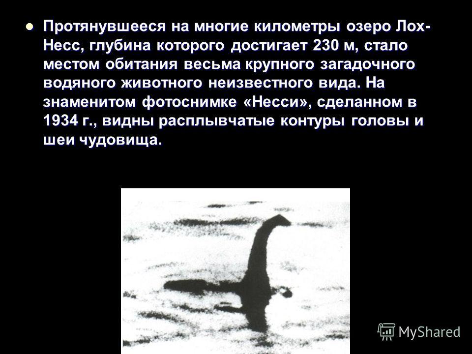 Протянувшееся на многие километры озеро Лох- Несс, глубина которого достигает 230 м, стало местом обитания весьма крупного загадочного водяного животного неизвестного вида. На знаменитом фотоснимке «Несси», сделанном в 1934 г., видны расплывчатые кон