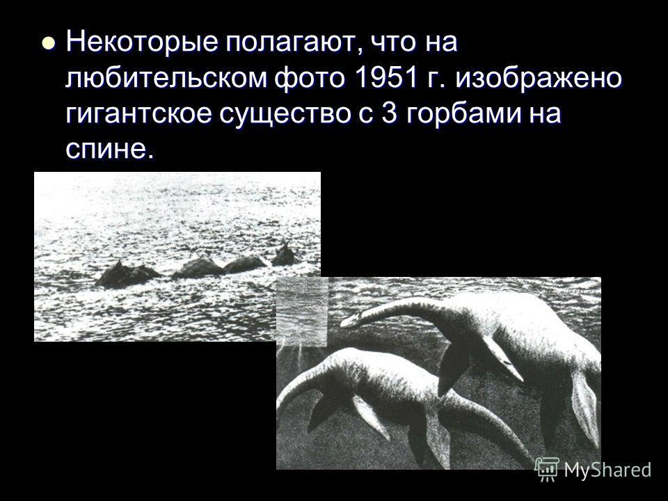 Некоторые полагают, что на любительском фото 1951 г. изображено гигантское существо с 3 горбами на спине. Некоторые полагают, что на любительском фото 1951 г. изображено гигантское существо с 3 горбами на спине.