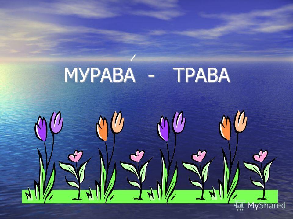 МУРАВА - ТРАВА