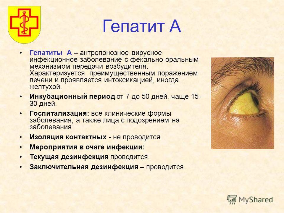 Гепатит А Гепатиты А – антропонозное вирусное инфекционное заболевание с фекально-оральным механизмом передачи возбудителя. Характеризуется преимущественным поражением печени и проявляется интоксикацией, иногда желтухой. Инкубационный период от 7 до