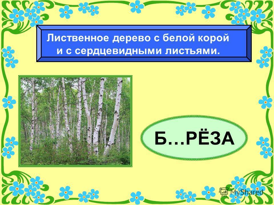 Б…РЁЗА Лиственное дерево с белой корой и с сердцевидными листьями.
