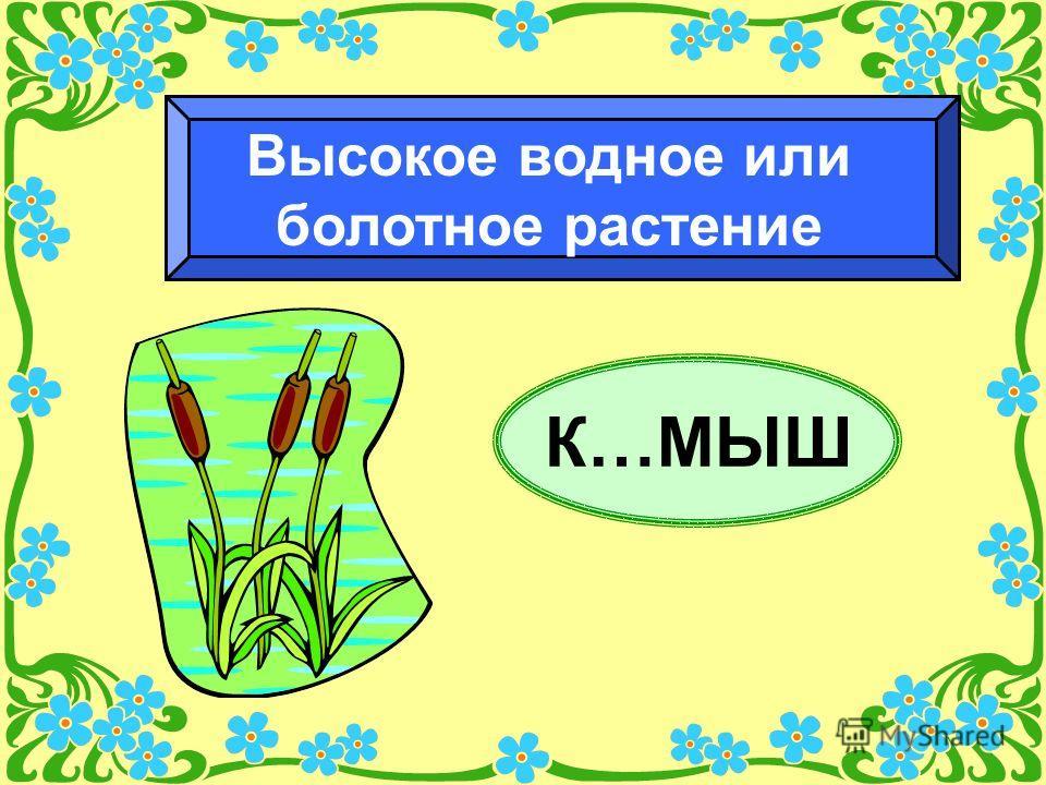 К…МЫШ Высокое водное или болотное растение