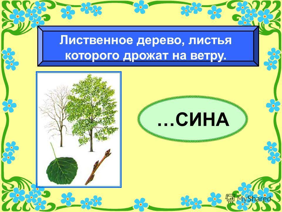 …СИНА Лиственное дерево, листья которого дрожат на ветру.