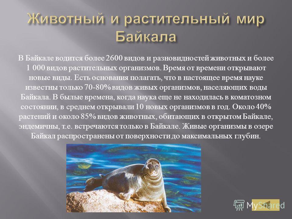 В Байкале водится более 2600 видов и разновидностей животных и более 1 000 видов растительных организмов. Время от времени открывают новые виды. Есть основания полагать, что в настоящее время науке известны только 70-80% видов живых организмов, насел