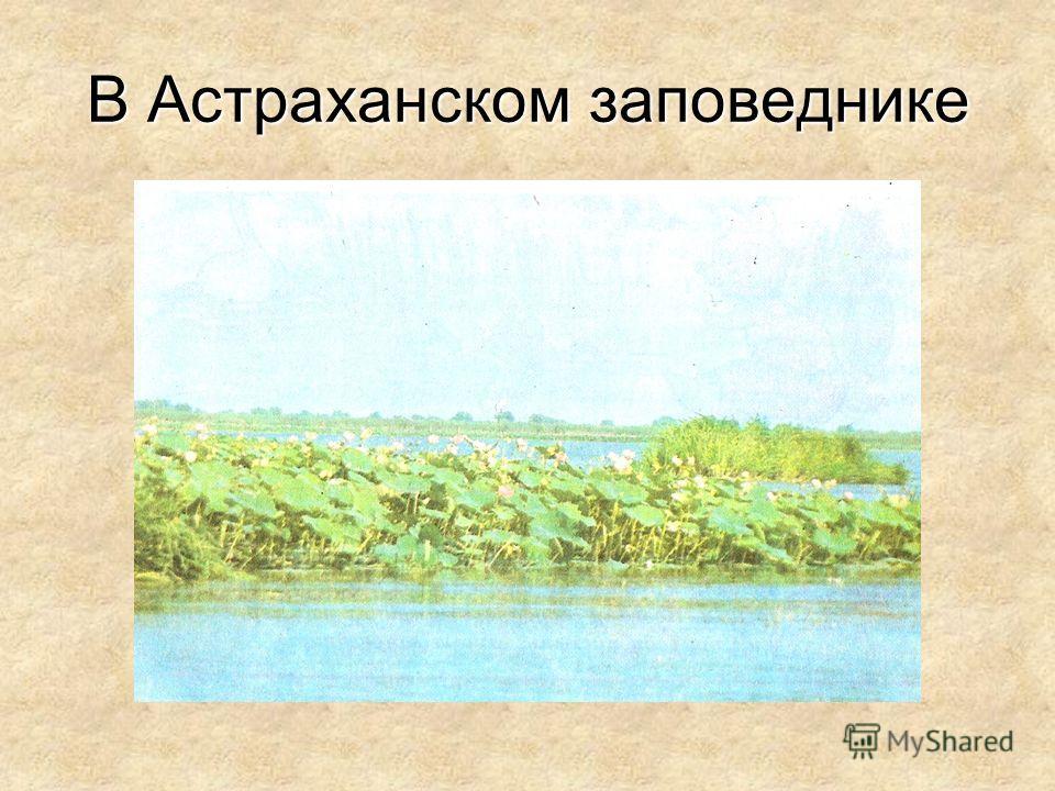 В Астраханском заповеднике