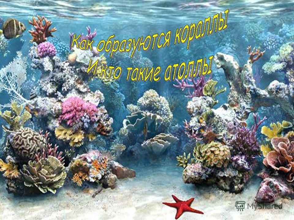 Класс коралловые полипы 7 класс презентация