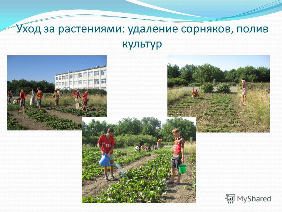 Уход за растениями: удаление сорняков, полив культур
