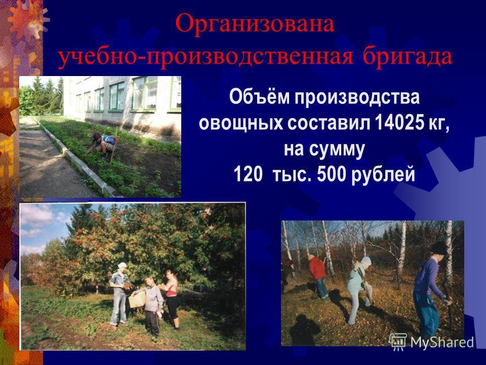 Организована учебно-производственная бригада Объём производства овощных составил 14025 кг, на сумму 120 тыс. 500 рублей