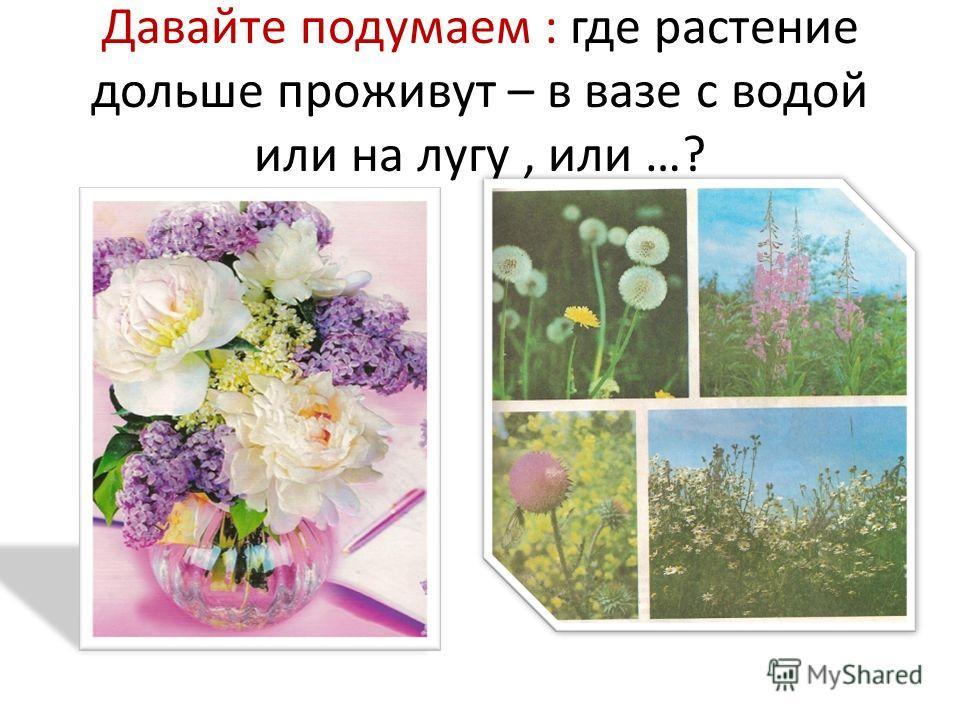Давайте подумаем : где растение дольше проживут – в вазе с водой или на лугу, или …?