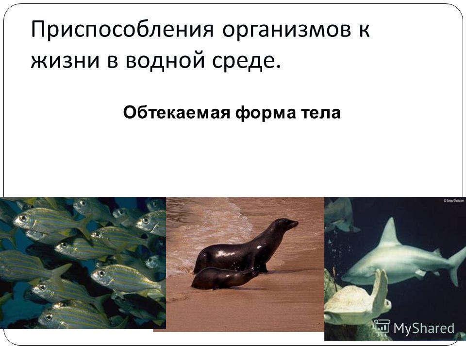 Приспособления организмов к жизни в водной среде. Обтекаемая форма тела