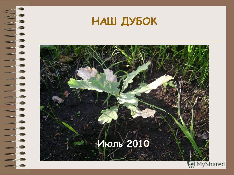 НАШ ДУБОК Июль 2010