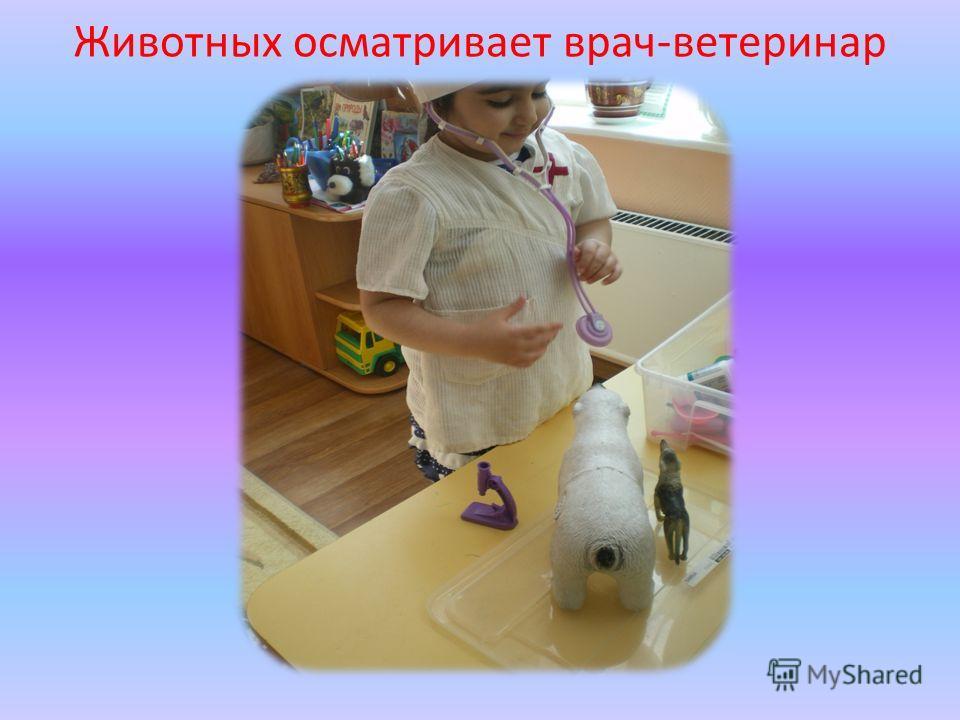 Животных осматривает врач-ветеринар
