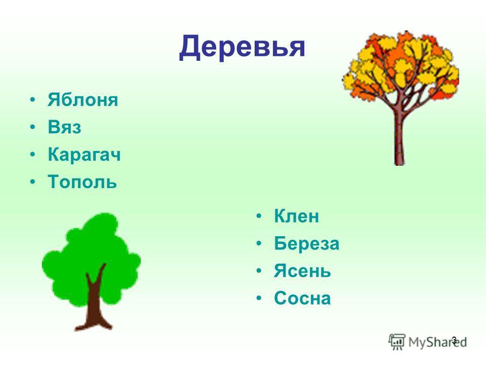 3 Деревья Яблоня Вяз Карагач Тополь Клен Береза Ясень Сосна