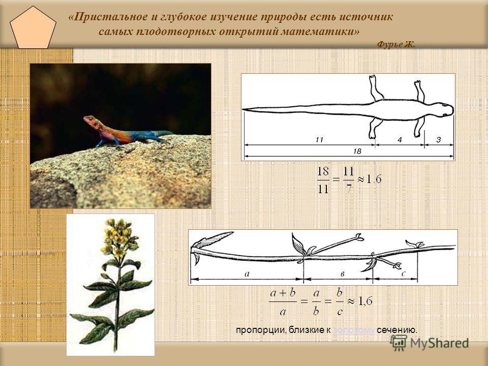 «Пристальное и глубокое изучение природы есть источник самых плодотворных открытий математики» Фурье Ж. пропорции, близкие к золотому сечению.золотому