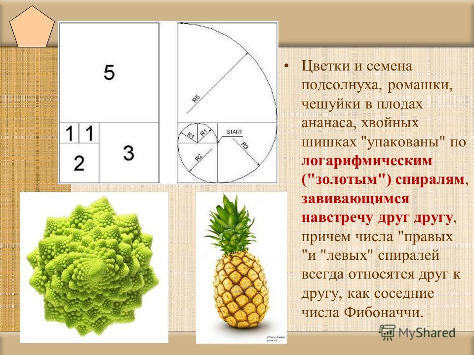 Цветки и семена подсолнуха, ромашки, чешуйки в плодах ананаса, хвойных шишках