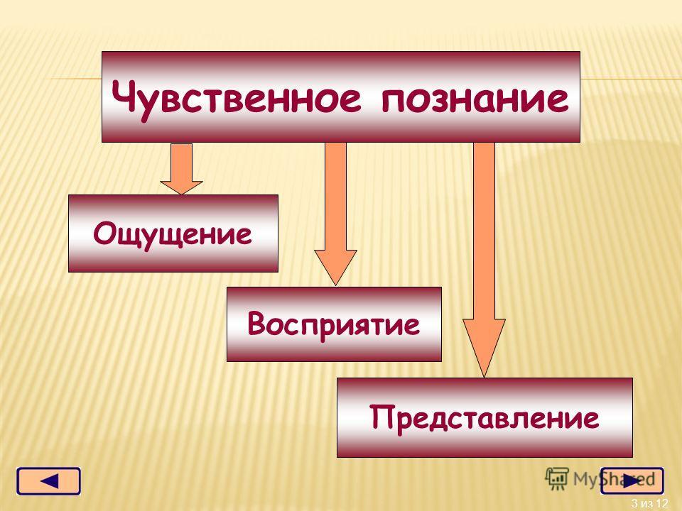 3 из 12 Представление Чувственное познание Ощущение Восприятие