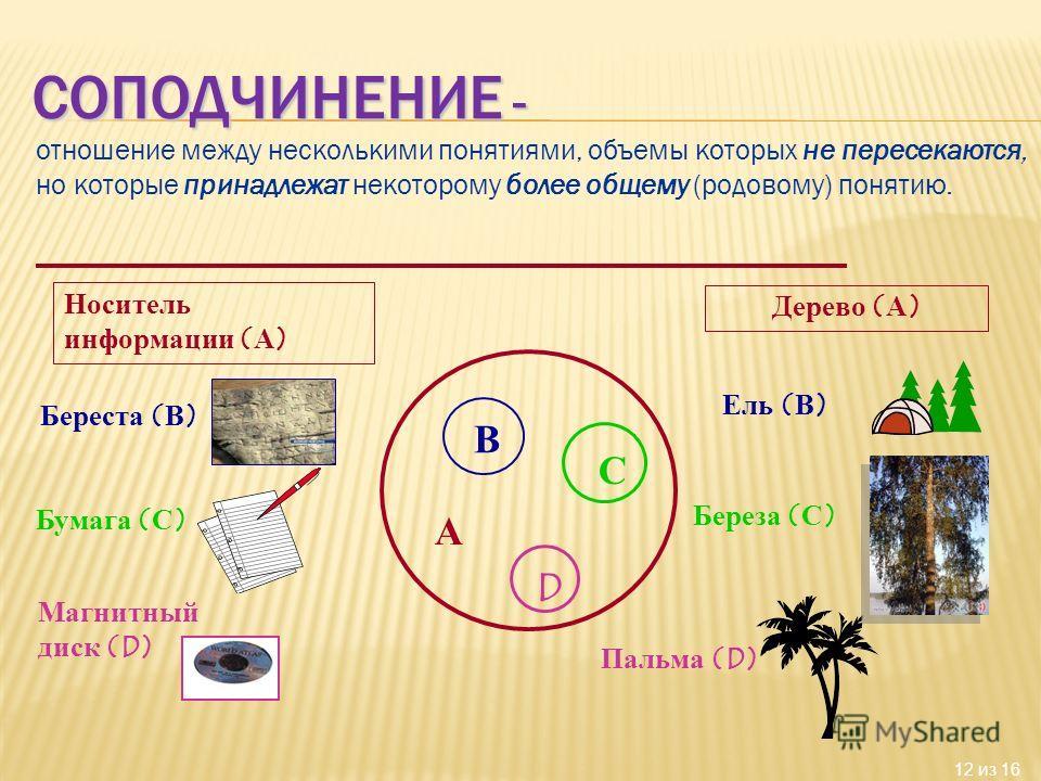 12 из 16 отношение между несколькими понятиями, объемы которых не пересекаются, но которые принадлежат некоторому более общему (родовому) понятию. А В С D Носитель информации (А) Береста (В) Бумага (С) Магнитный диск (D) Дерево (А) Ель (В) Береза (С)