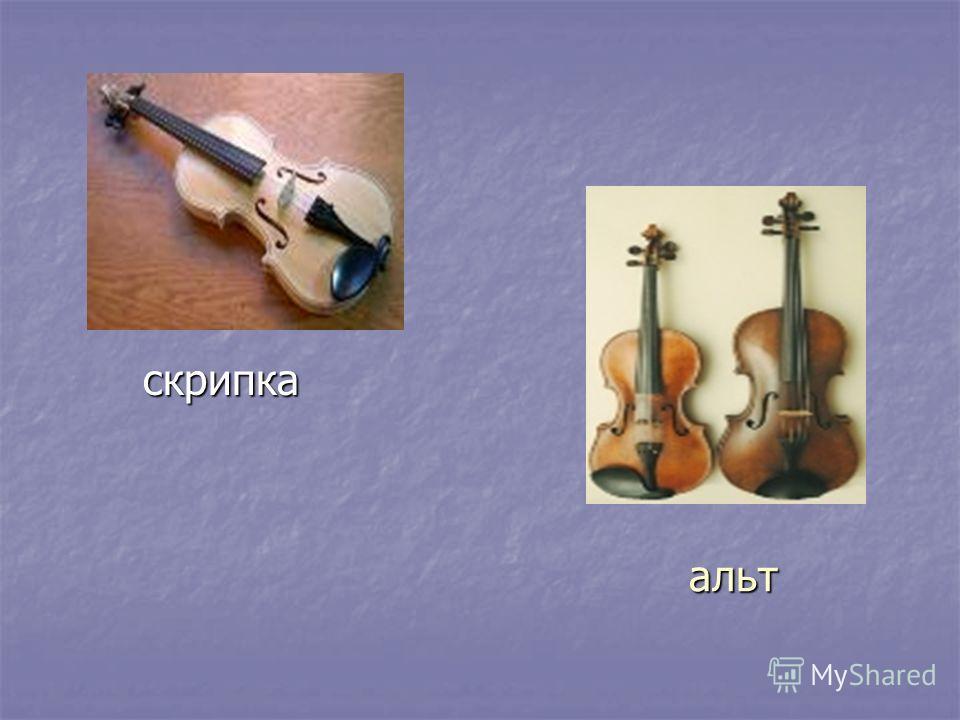 альт скрипка скрипка