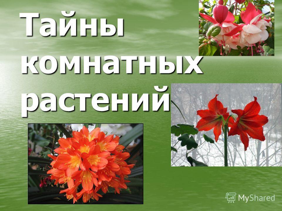Тайны комнатных растений