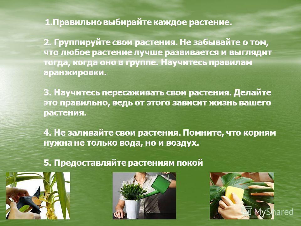 1.Правильно выбирайте каждое растение. 2. Группируйте свои растения. Не забывайте о том, что любое растение лучше развивается и выглядит тогда, когда оно в группе. Научитесь правилам аранжировки. 3. Научитесь пересаживать свои растения. Делайте это п