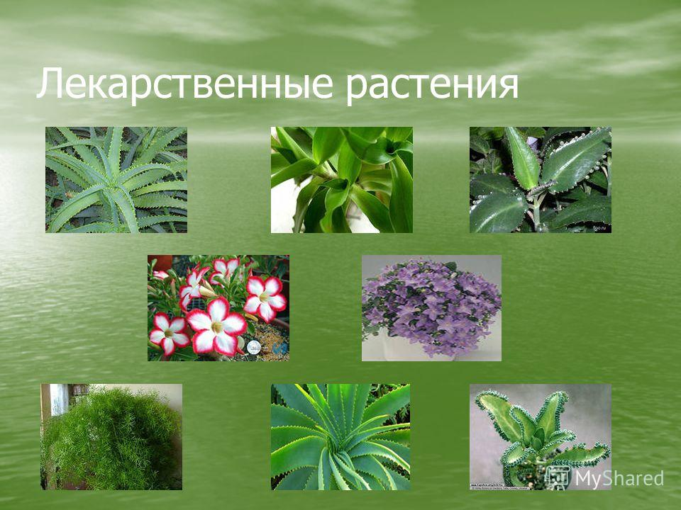 medicinal plant thesis Dissertation completion grant helsinki phd thesis on antimicrobial activity of medicinal plants milf an argumentative essay on corporal punishment personal quality essay.
