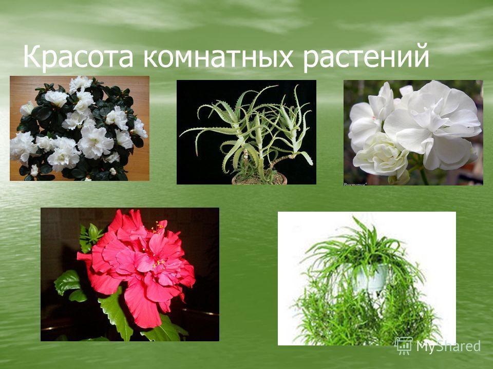 Красота комнатных растений