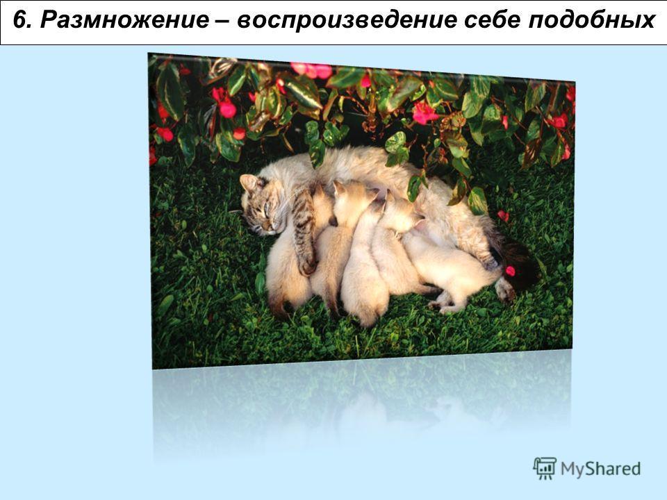 6. Размножение – воспроизведение себе подобных
