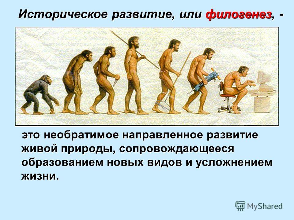 Историческое развитие, или филогенез, - это необратимое направленное развитие живой природы, сопровождающееся образованием новых видов и усложнением жизни.