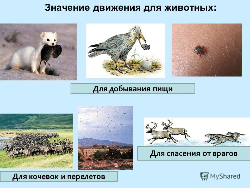 Значение движения для животных: Для добывания пищи Для кочевок и перелетов Для спасения от врагов