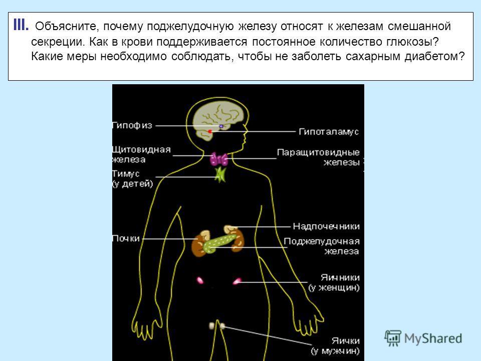 III. Объясните, почему поджелудочную железу относят к железам смешанной секреции. Как в крови поддерживается постоянное количество глюкозы? Какие меры необходимо соблюдать, чтобы не заболеть сахарным диабетом?