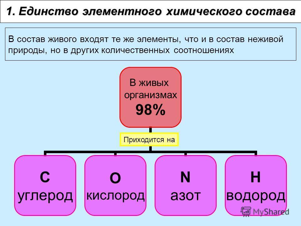 1. Единство элементного химического состава В живых организмах 98% С углерод О кислород N азот Н водород В состав живого входят те же элементы, что и в состав неживой природы, но в других количественных соотношениях Приходится на