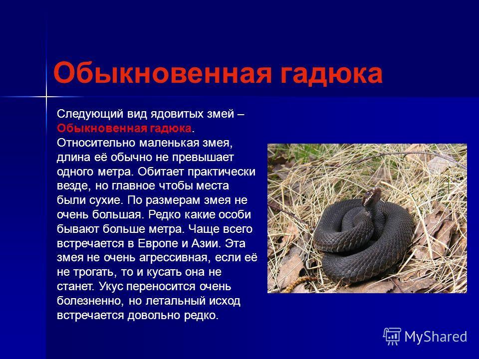 Следующий вид ядовитых змей – Обыкновенная гадюка. Относительно маленькая змея, длина её обычно не превышает одного метра. Обитает практически везде, но главное чтобы места были сухие. По размерам змея не очень большая. Редко какие особи бывают больш