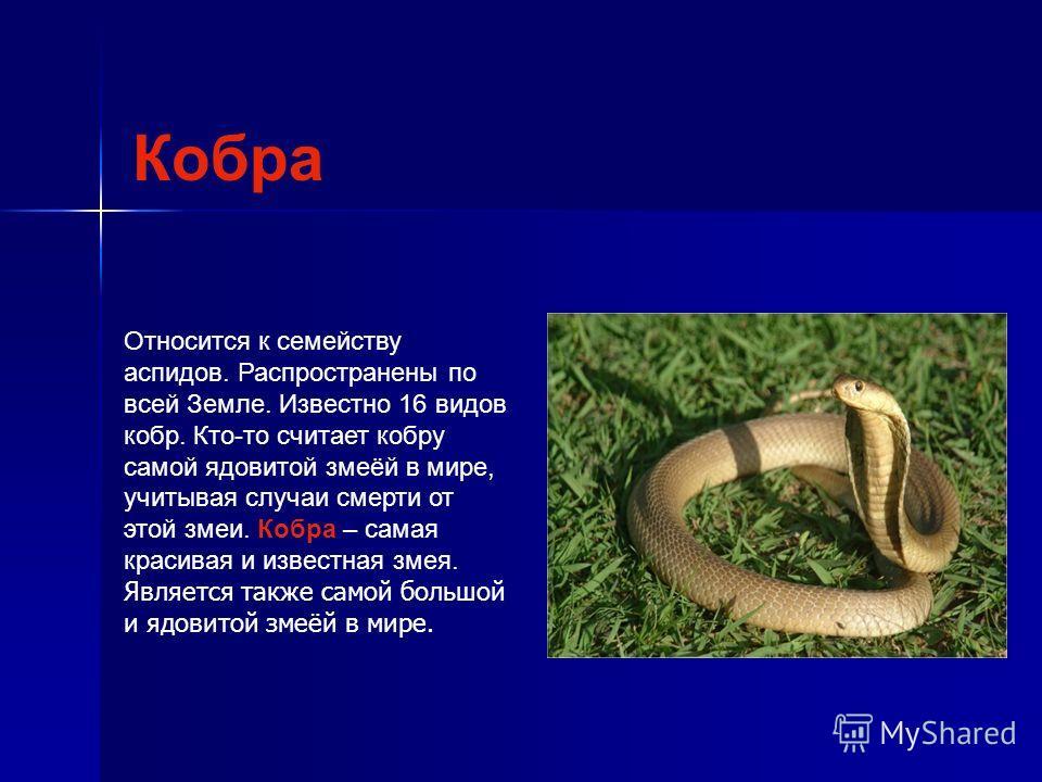 Кобра Относится к семейству аспидов. Распространены по всей Земле. Известно 16 видов кобр. Кто-то считает кобру самой ядовитой змеёй в мире, учитывая случаи смерти от этой змеи. Кобра – самая красивая и известная змея. Является также самой большой и
