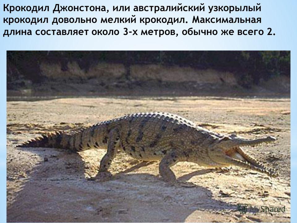 Крокодил Джонстона, или австралийский узкорылый крокодил довольно мелкий крокодил. Максимальная длина составляет около 3-х метров, обычно же всего 2.