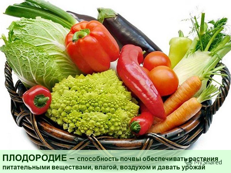 ПЛОДОРОДИЕ – способность почвы обеспечивать растения питательными веществами, влагой, воздухом и давать урожай
