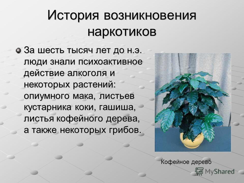 История возникновения наркотиков За шесть тысяч лет до н.э. люди знали психоактивное действие алкоголя и некоторых растений: опиумного мака, листьев кустарника коки, гашиша, листья кофейного дерева, а также некоторых грибов. Кофейное дерево