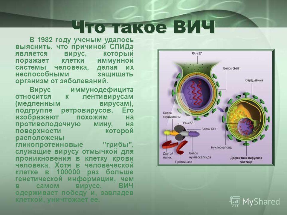 Что такое ВИЧ В 1982 году ученым удалось выяснить, что причиной СПИДа является вирус, который поражает клетки иммунной системы человека, делая их неспособными защищать организм от заболеваний. Вирус иммунодефицита относится к лентивирусам (медленным