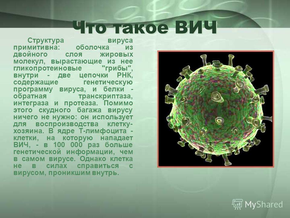 Структура вируса примитивна: оболочка из двойного слоя жировых молекул, вырастающие из нее гликопротеиновые