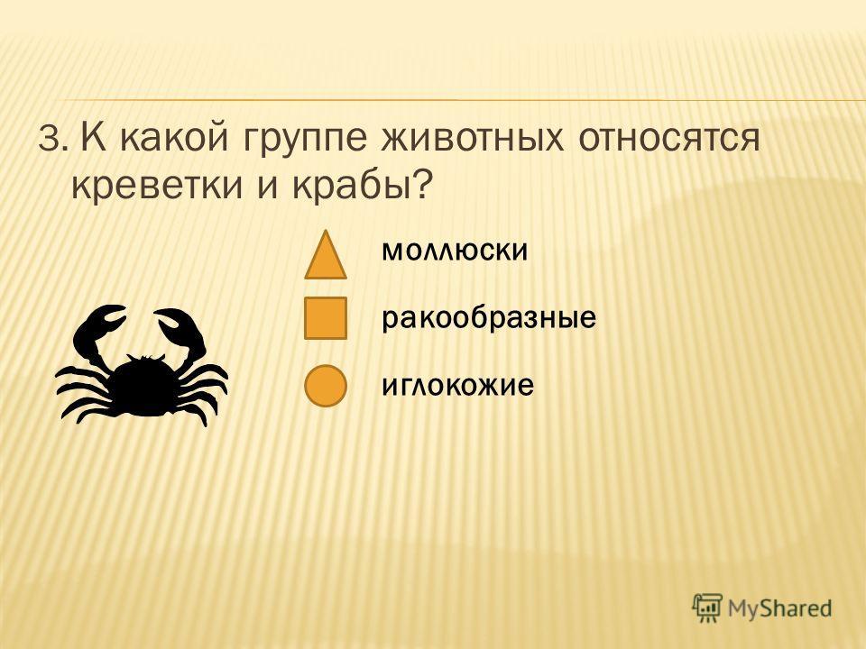 3. К какой группе животных относятся креветки и крабы? моллюски ракообразные иглокожие