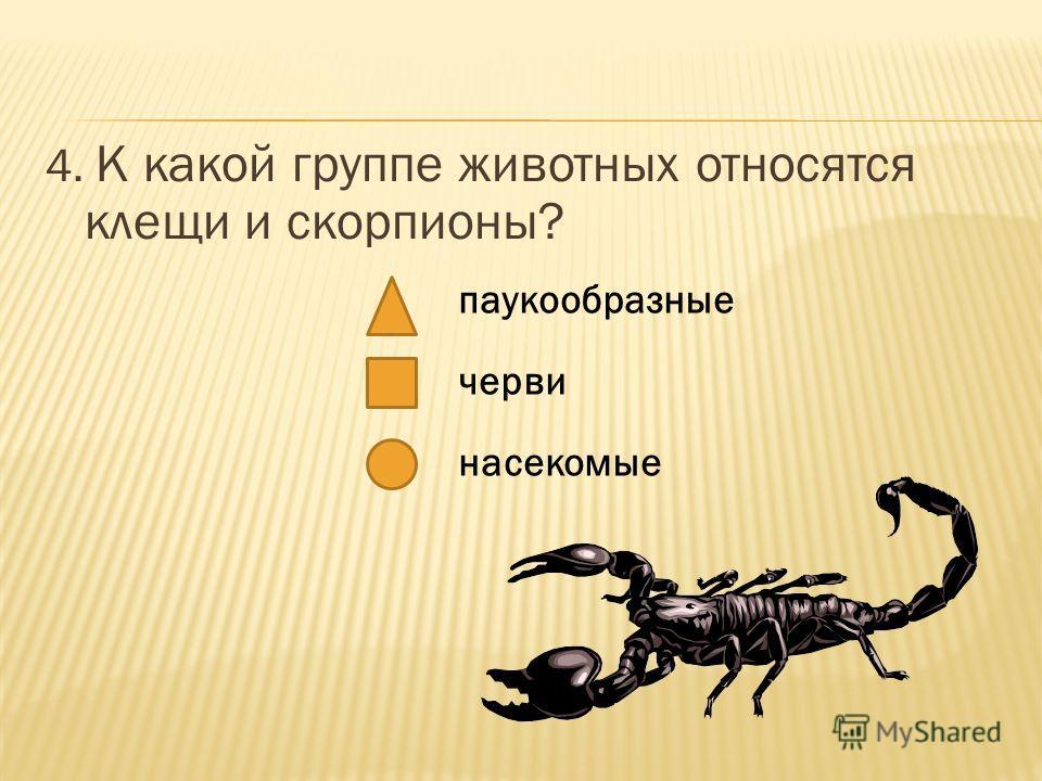 4. К какой группе животных относятся клещи и скорпионы? паукообразные черви насекомые