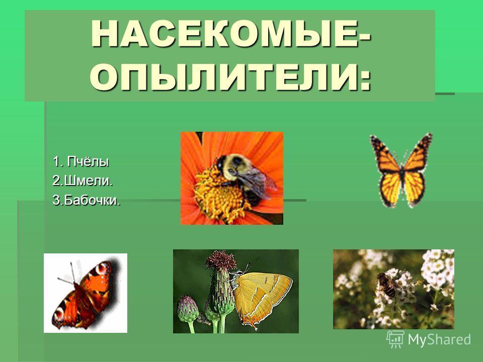 НАСЕКОМЫЕ- ОПЫЛИТЕЛИ: 1. Пчёлы 2.Шмели.3.Бабочки.