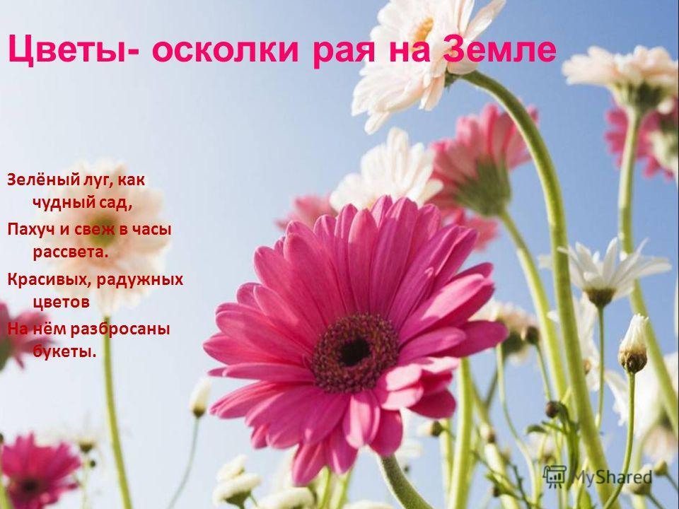 Цветы- осколки рая на Земле Зелёный луг, как чудный сад, Пахуч и свеж в часы рассвета. Красивых, радужных цветов На нём разбросаны букеты.