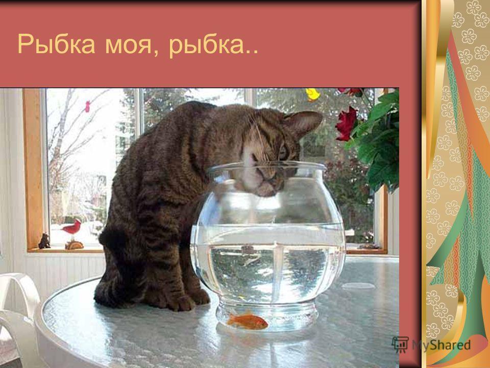 Рыбка моя, рыбка..