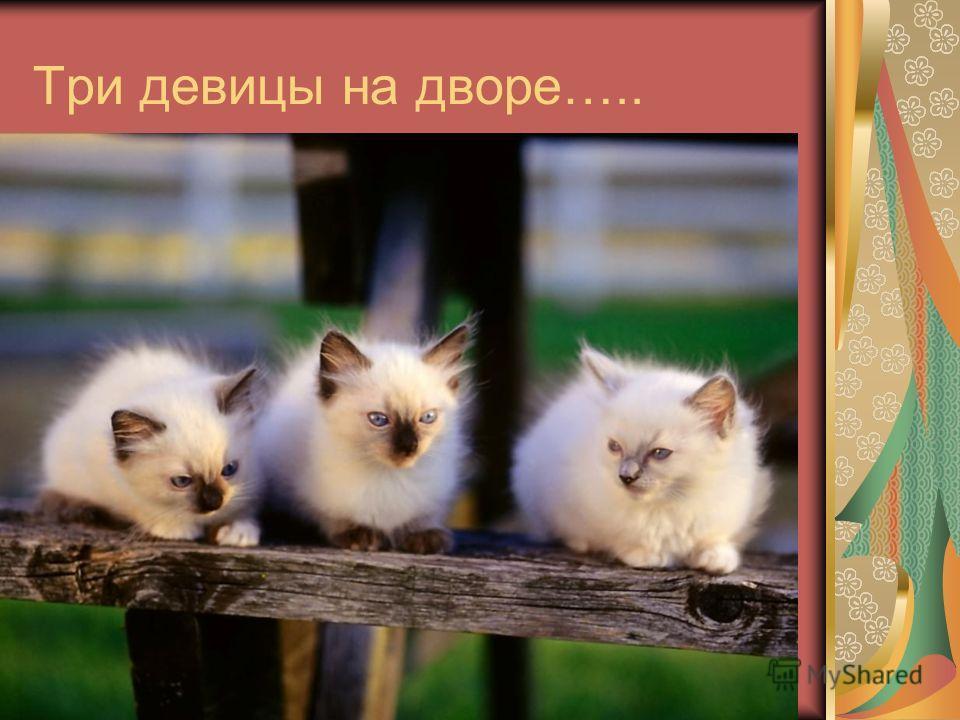 Три девицы на дворе….. р